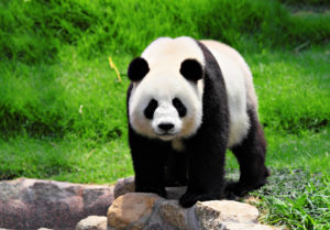 Why Google's Latest Panda Update Matters to Content Marketers